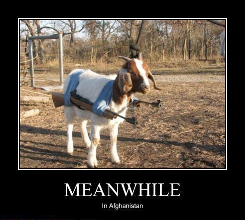 Warning: This Goat Is Loaded