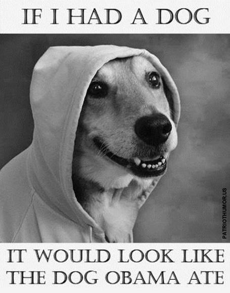 If I Had A Dog