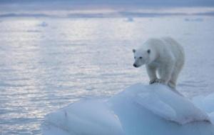 20111027_PolarBear
