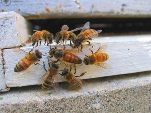 Bee-cluster