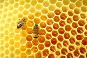 Collapse Of Bee Colonies Is Latest Target For Anti-Pesticide Groups