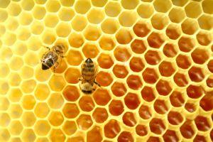 Bees-honey-combs