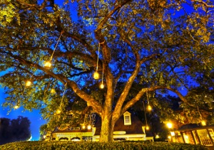 20130628_LIBERTY_TREE_NIGHT_LARGE