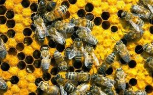 AA - Bees