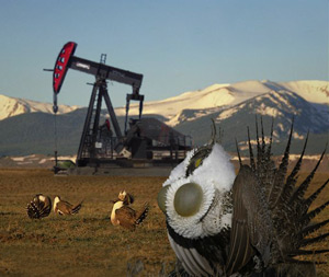 Energy and the sage grouse