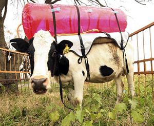 Cow Tank