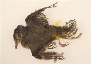 Murdock 2, Warbler killed