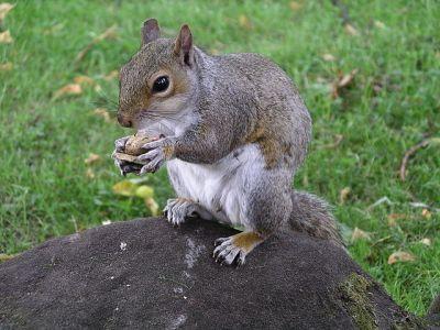 how squirrels make huge trees